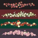 Fronteras de las flores stock de ilustración