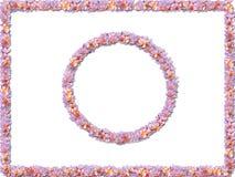 Fronteras en colores pastel de la flor Foto de archivo