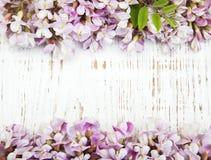 Frontière avec des fleurs d'acacia Images stock