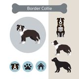 Frontière Collie Dog Breed Infographic illustration stock