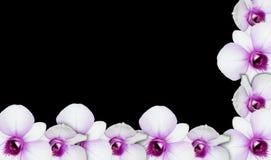 Frontière d'orchidée Photographie stock