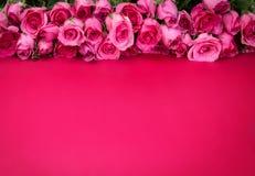 Frontière de belle rose douce fraîche de rose Photo libre de droits