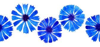 Frontière de bleuet d'aquarelle Photos stock