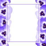 Frontière de carte de Violet Viola Garden Pansy Flower Banner Illustration de vecteur illustration stock