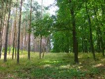 Frontière de deux forêts différentes Image libre de droits