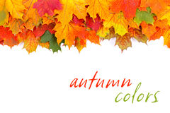 Frontière de feuilles d'automne Photos libres de droits