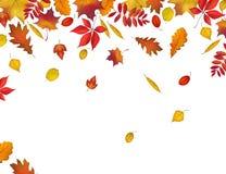 Frontière de feuilles d'automne d'isolement sur le fond blanc illustration stock