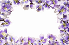 Frontière de fleur Photos stock
