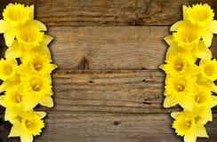Frontière de jonquilles de ressort ou fond de cadre Image stock