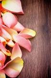 Frontière de Rose Petals Photo stock