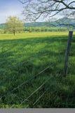 Frontière de sécurité, arbre, source Images stock