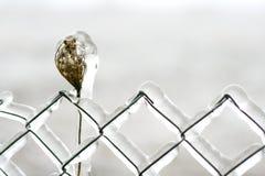 Frontière de sécurité couverte en glace Images libres de droits