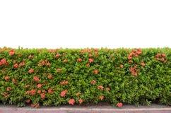 Frontière de sécurité d'arbuste Image stock