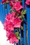 Frontière de sécurité de Rododendrun Photo libre de droits