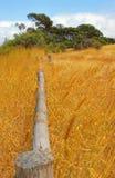 Frontière de sécurité en bois dans le domaine de blé Photos libres de droits