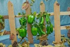 Frontière de sécurité en bois Poivrons et concombres artificiels Fruits et légumes artificiels sur un fond bleu photo libre de droits