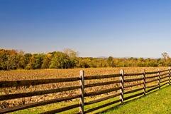 Frontière de sécurité et champ de maïs d'automne Photographie stock libre de droits