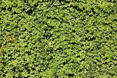 Frontière de sécurité sous tension de feuillage vert Photo libre de droits