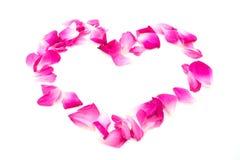 Frontière de valentine d'amour de coeur de Rose d'isolement sur le fond blanc Image libre de droits