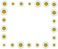 Frontière de vigne de fleur blanche Photographie stock libre de droits