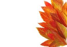 Frontière des feuilles d'automne colorées lumineuses, fond blanc Photo libre de droits