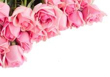 Frontière des roses roses fraîches de jardin photos stock