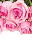Frontière des roses roses fraîches de jardin Images libres de droits