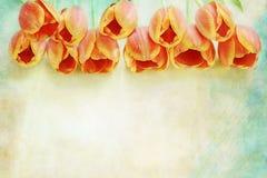 Frontière des tulipes oranges Image stock