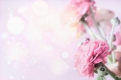 Frontière en pastel florale rose avec le fond et la renoncule de bokeh Photos stock
