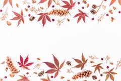 Frontière faite de feuilles d'automne, fleurs sèches et cônes de pin sur le fond blanc Configuration plate, vue supérieure, l'esp Image stock