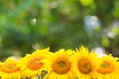 Frontière florale Photo libre de droits