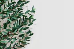Frontière florale avec l'espace pour la publicité de produit Photo stock