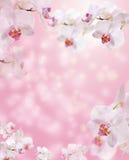 Frontière florale avec l'orchidée Photographie stock