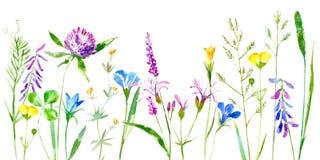 Frontière florale de fleurs sauvages et herbes sur un fond blanc Photo libre de droits