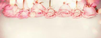 Frontière florale de rose de rose avec l'éclairage de bokeh, couleur en pastel Photographie stock