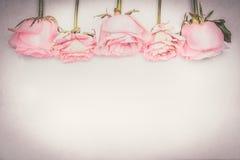 Frontière florale de rose de rose, pastel coloré, carte de voeux Photographie stock