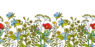 Frontière florale de vecteur sans couture avec les herbes et les fleurs sauvages colorées illustration de vecteur