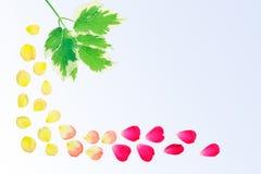 Frontière florale sur le gradient bleu Image stock