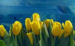 frontière jaune de tulipes sur le fond en bois bleu Images libres de droits