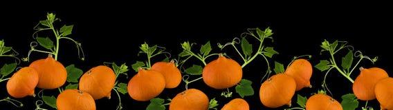 Frontière ou bannière de potiron dans le format de panorama pour Halloween ou thanksgiving d'isolement sur le fond noir photos stock