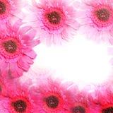 Frontière rose colorée de fleur Photographie stock