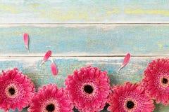 Frontière rouge fraîche de fleur de gerbera sur le fond en bois de vintage Carte de voeux de jour de mère ou de femme Type rustiq photographie stock