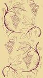 Frontière sans couture du groupe de raisins Image stock