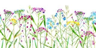 Frontière sans couture florale de fleurs sauvages et herbes sur un fond blanc Photographie stock