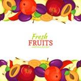 Frontière sans couture horizontale de prune d'Apple Illustration de vecteur illustration libre de droits