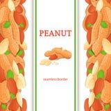 Frontière sans couture verticale d'écrou d'arachide Dirigez l'illustration avec la composition d'un fruit nuts d'arachides délici Images stock