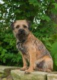 Frontière Terrier Photo libre de droits