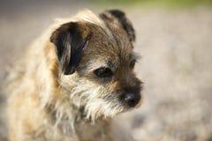 Frontière Terrier Image libre de droits