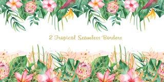 Frontière tropicale sans couture d'aquarelle illustration libre de droits