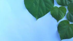 Frontière verte de feuille d'isolement sur le fond blanc photos stock